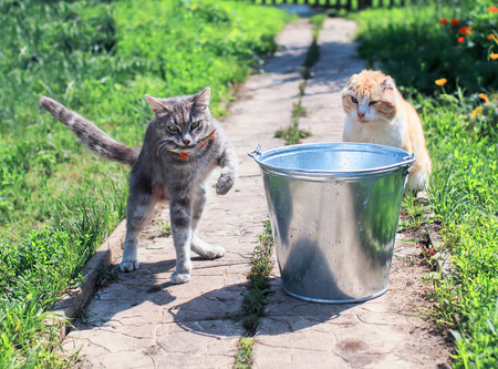 striped kitten caught fish in a bucket on the street in summer Stock Photo - 106616456