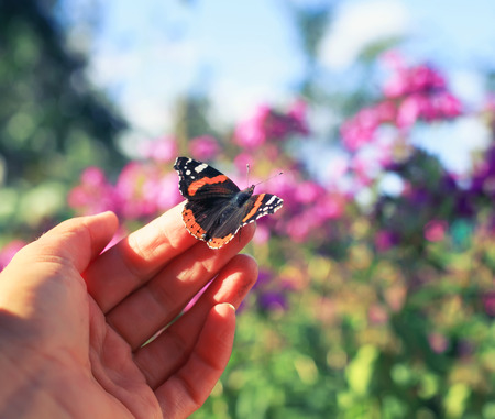 bright orange butterfly sits on the fingers of a mans hand and is going to fly to the heights 版權商用圖片
