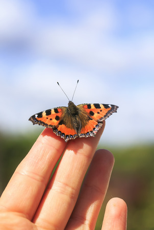bright orange butterfly sits on the fingers of a man's hand and is going to fly to blue sky