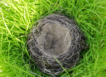 bird's nest of small branches lies in the lush green grass in the village yard