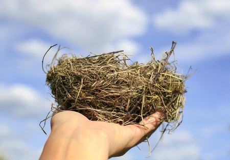 bird's nest of small branches lies on the outstretched palm against the clear blue sky Stock Photo