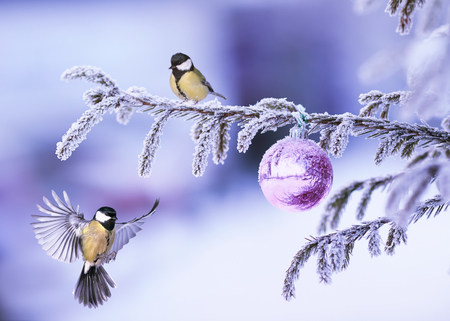 New Year card with two beautiful tit birds flying on a Christmas tree with a brilliant ball in a winter park