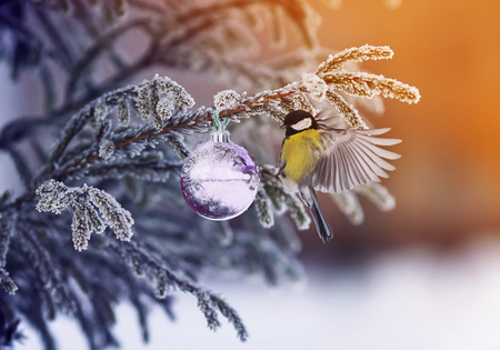 new year card with a beautiful bird tit on the Christmas tree with a brilliant ball in the winter park 免版税图像