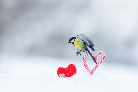 greeting card with cute little bird tit flies to a frame of red sweet heart-shaped lollipops in white snow on Valentine's Day 免版税图像