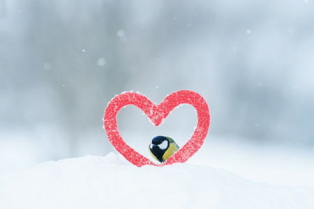cute Valentine card with bird tit Peeps out of the frame in the form of a knitted red heart Stock Photo