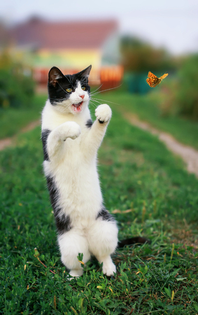 cute funny kitten in a summer sunny garden catches a flying orange butterfly jumping on its hind legs in clear weather in green grass Фото со стока