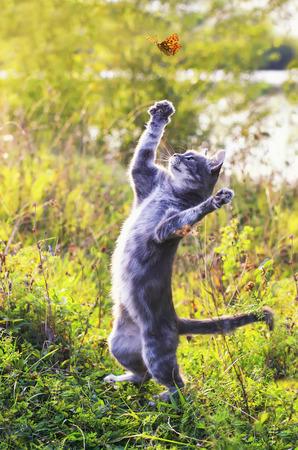 Lindo gatito atigrado en un prado soleado de verano atrapa una mariposa naranja voladora saltando en un clima despejado en la hierba verde en el jardín Foto de archivo