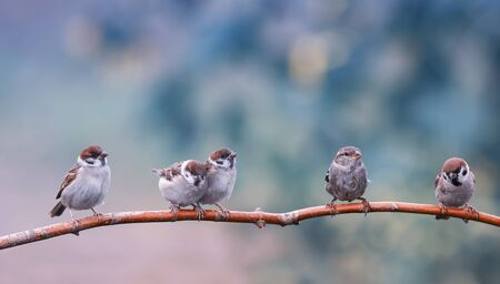 natural background with five small funny birds sparrows and Chicks sitting on a branch in a warm summer garden Stock fotó
