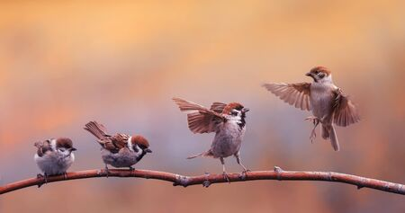 funny little Chicks of a bird a Sparrow standing on a branch and bet flapping the wings of the solar Park Standard-Bild - 128961414