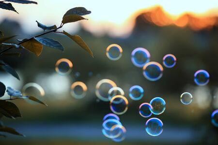 belle bolle di sapone lucenti che sorvolano il cielo al tramonto in un luminoso parco estivo Archivio Fotografico