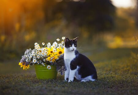 portrait of cute kitten sitting in summer warm garden in a meadow next to a bouquet of wildflowers in a bucket against the sunset yellow light
