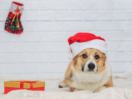 Holiday card with cute ginger puppy dog Corgi in red Christmas cap sitting on white plaid with gift Stock Photo