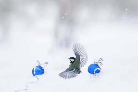 bird tit takes off from the white fluffy snow in Christmas garden among ornaments of glass balls
