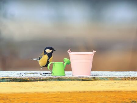 bird tit stands on benches among the garden equipment watering cans and buckets on a Sunny spring day