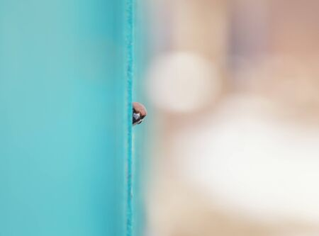 funny little bird Sparrow peeks out curiously from behind a wooden fence with his head out