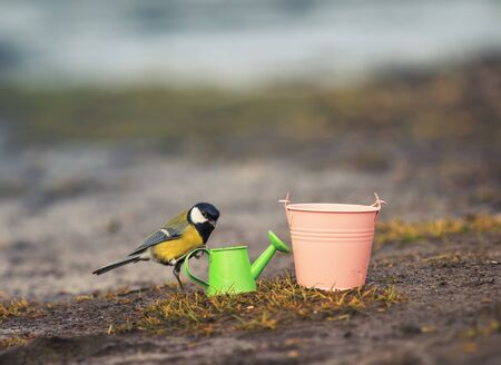 composition with bird tit flew on garden equipment watering cans and buckets on a Sunny spring day 版權商用圖片