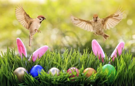 Easter card with two birds flying in spring sunrise Sunny day over colorful eggs and rabbit ears in the grass 版權商用圖片