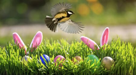 Easter card with bird flying in spring sunrise Sunny day over colorful eggs and rabbit ears in the grass 版權商用圖片
