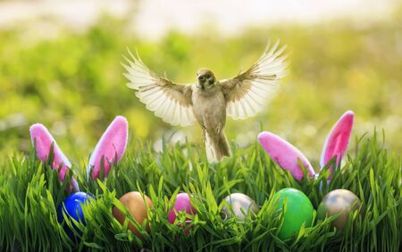 festive Easter card with a Sparrow bird flying with its wings and feathers spread over multicolored eggs and rabbit ears in the green grass on a spring Sunday Sunny day