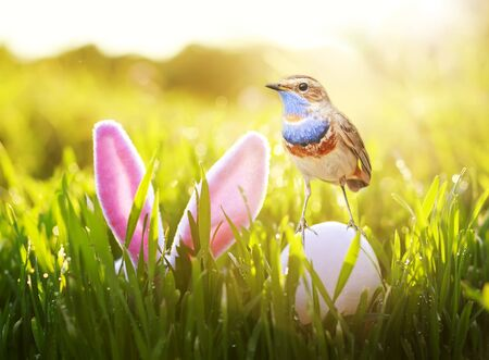Easter card with a bird standing on an egg in spring Sunday Sunny day next to pink rabbit ears in the green grass