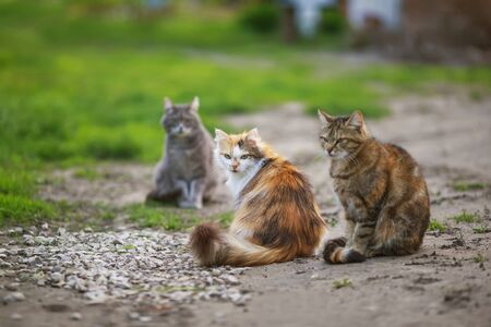 three different cats sit on the path in the garden on a spring Sunny day