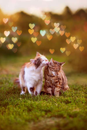 two beautiful cats in love sitting in the spring garden and caressing in the glare of Sunny hearts Standard-Bild