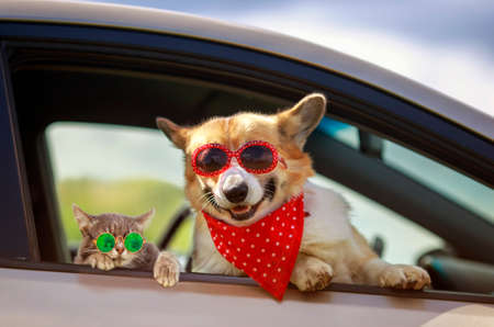 funny cat and dog in sunglasses stuck their muzzles and paws out of the car window during a trip out of town Standard-Bild