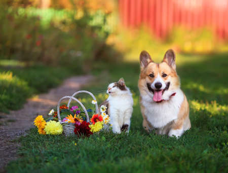 beautiful cat and dog sit in a Sunny summer garden next to a basket of flowers Standard-Bild