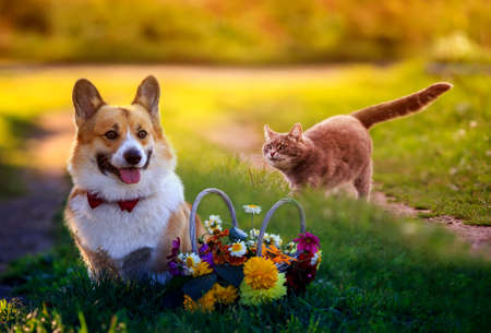 beautiful cat and dog walk in a Sunny summer garden next to a festive basket of flowers