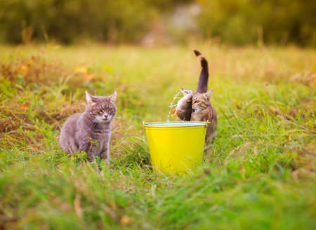 two cats are fishing in a bucket standing in a green clearing Standard-Bild