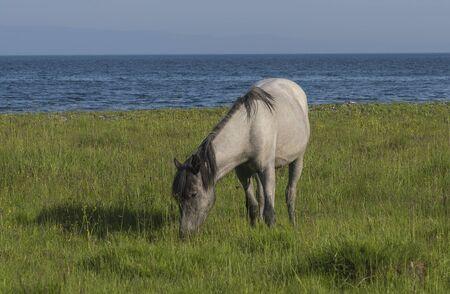 grazing: horse grazing Stock Photo