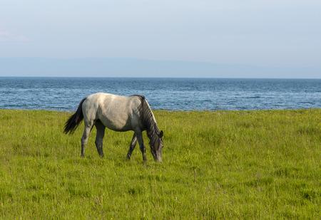grazing: horse grazing near lake