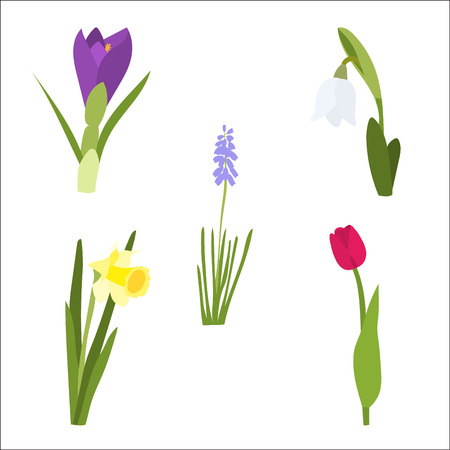 spring flower set with tulip, daffodil, snowdrop