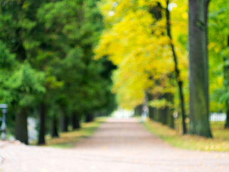 blurred image of a small park, trees with yellow and green foliage, a path. Walk in the fresh air. Stock Photo