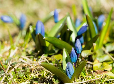 Beautiful closeup flower with blu blossom. The beginning of summer.