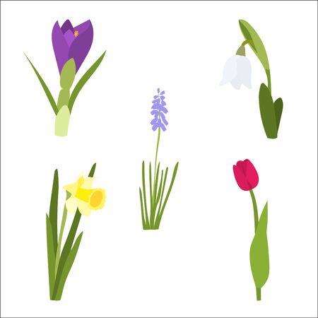 Spring flower set with tulip, daffodil and snowdrop. Çizim