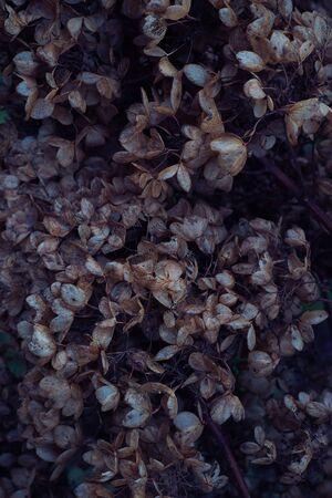 Moody dark art floral photo with little dried flowers of hydrangea on a dark dry brown background, winter backdrop, vertical Zdjęcie Seryjne