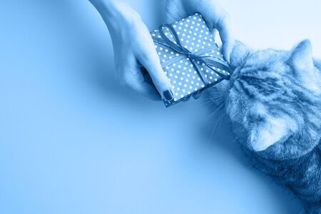 Classic blue, toned image. A woman hands holding present, manicured hands with nail polish.