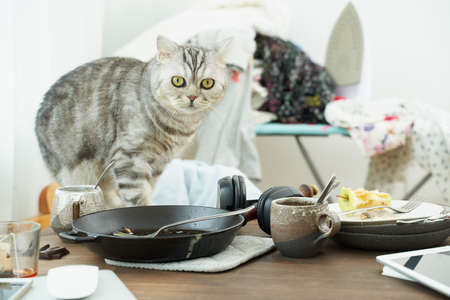 Cat looks with horror and fright against background of mess, dirty dishes, piles of clothes