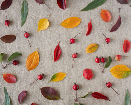 Autumn background of berries, small wild apples, acorns and leaves o gray linen textile background. Pattern of natural elements