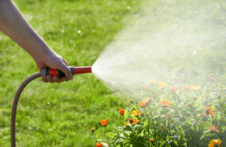 unrecognizable person waters flowers and plants with hose in home garden Reklamní fotografie