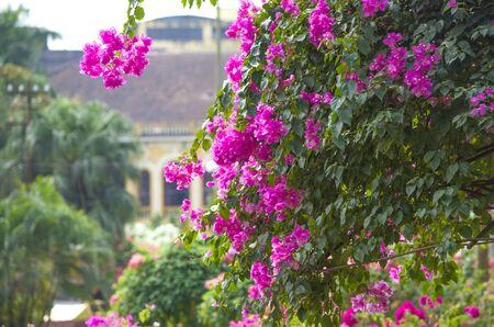 tropics: beautiful landscape garden blossoming, tropics