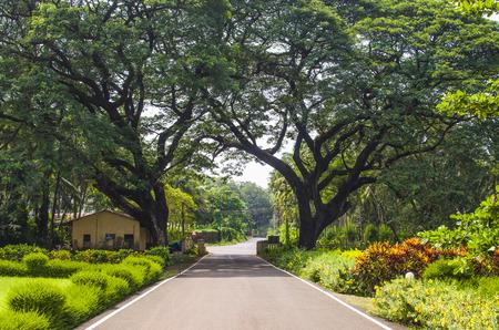 tropics: beautiful landscape tropics