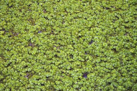vegetation: texture of vegetation on water