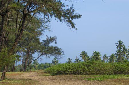 vegetation: landscape tropical with vegetation