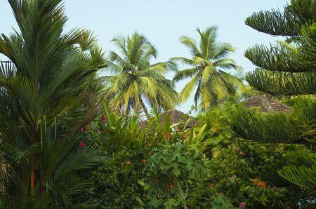 beautiful garden of tropical plants, garden, tropical plants, plants, flowers, palm trees, tropics, Asia, nature