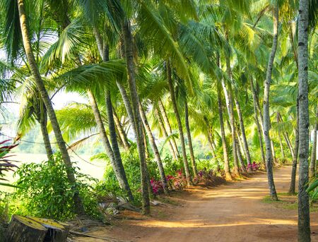 along: palm tree trees along the road Stock Photo