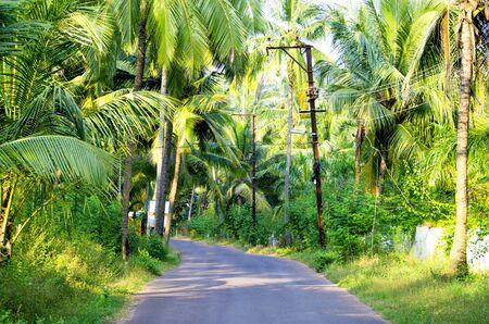 tropics: road in the village tropics the nature