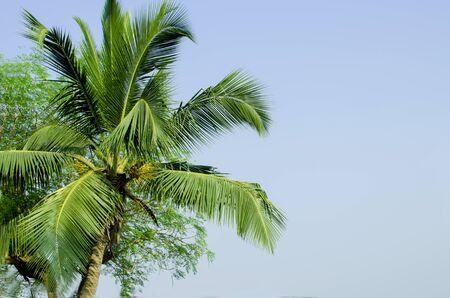 arboleda: palmeras y se encuentra en la India
