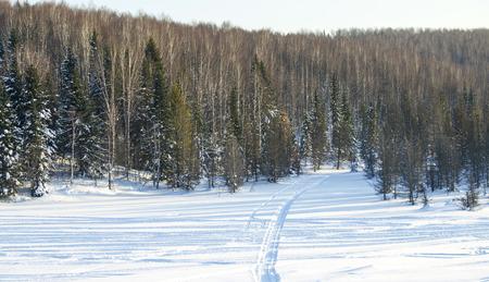 siberia: landscape the wood in the winter in Russia Siberia Stock Photo